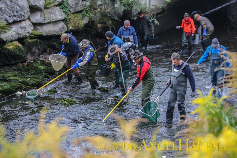 Fischrettungsaktion des AFV im Mühlgang in Graz.