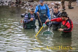 Fischrettung im Grazer Mühlgang.