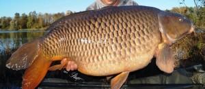 Aussichten auf Fänge wie diesen 41,5 Kilogramm schweren Schuppenkarpfen machen das FZZ für Fischer aus ganz Europa interessant. © FZZ