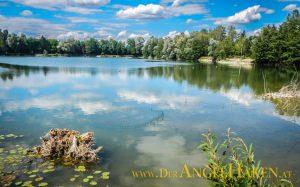 Ufersanierung am Baggersee: Die Wasserpflanzen breiten sich über den Sommer in der Flachwasserzone aus.