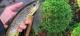 COVID-19: Fischen in der Steiermark