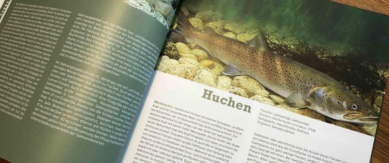 Buch Wolfgang Hauer - Fische, Krebse & Muscheln in heimischen Seen und Flüssen